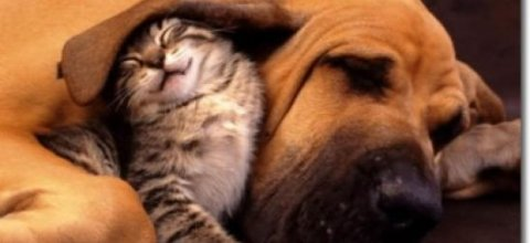 The First European Conference on 'The welfare of dogs and cats' in Brussels
