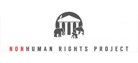 Non-Human Rights Project